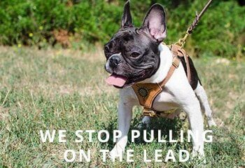 Best-Small-Dog-Harness-for-French-Bulldog-big