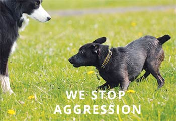 Patterdale-Lunging