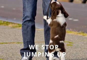 Springer-jumping-up