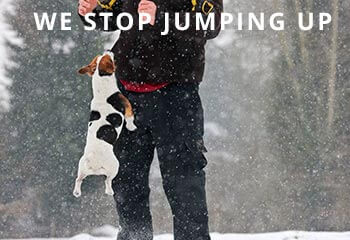 jack-russell-terrier-dog-jumping-up-against-owner-in-the-snow-during-D2NB61_InPixio