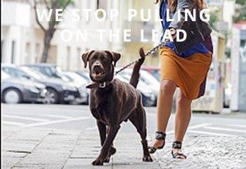 labrador-pulling-on-lead