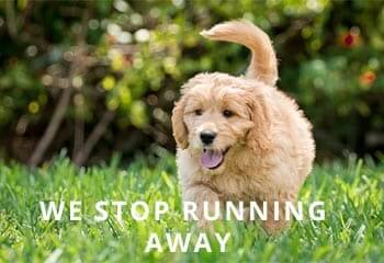 10-Reasons-to-Own-a-Goldendoodle