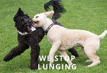Lunging