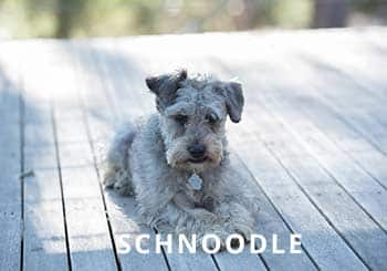Soliloquy-Dog