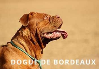 Dog-Soliloquy
