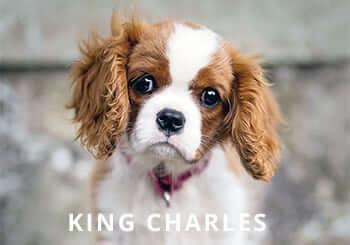 King-Charles.jpg