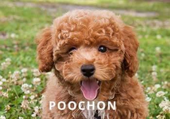 Puppy-Soliloquy