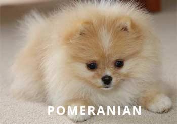 Soliloquyy-Puppy.jpg