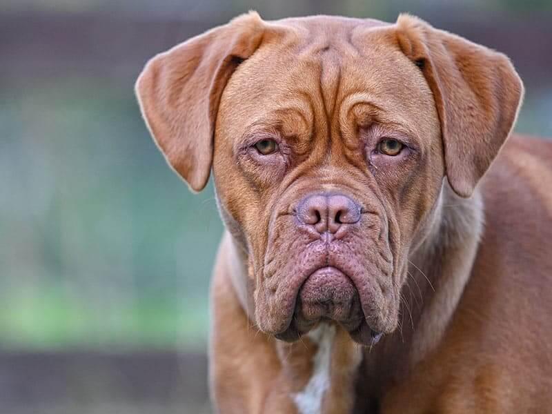 Dog-de-Bord-page-dog